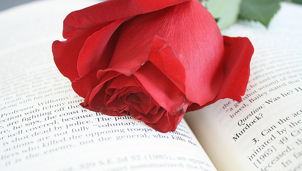 rosa roja y libro